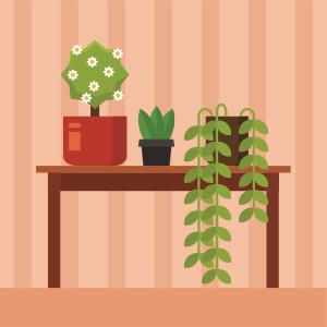 Augalai kambaryje